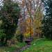 OK's Pics hat ein Foto gepostet:Herbsstimmung im Biebricher Schloßpark