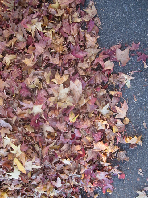 Old Maple Leaves on Ground