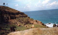 Moreton Island Cape Moreton 64