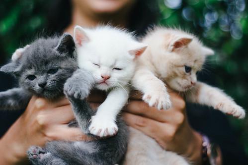 90/100 - Kitties