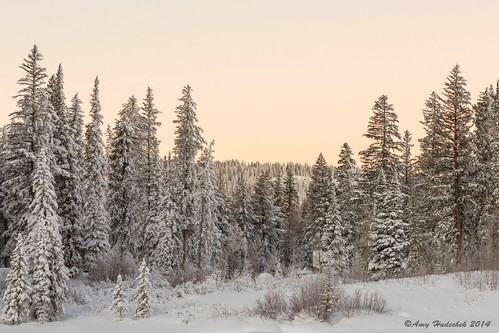 trees winter snow sunrise dawn colorado scenic freezing grandmesa grandmesanationalforest amyhudechek