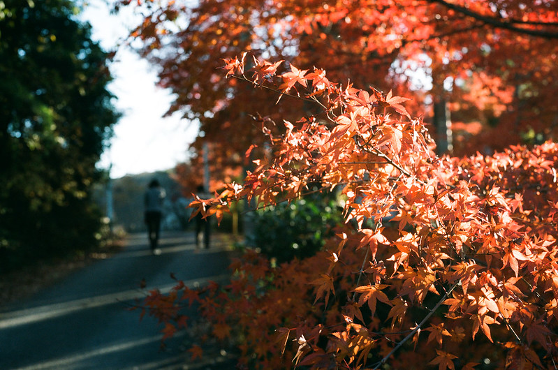 stay with fortune autumn colours