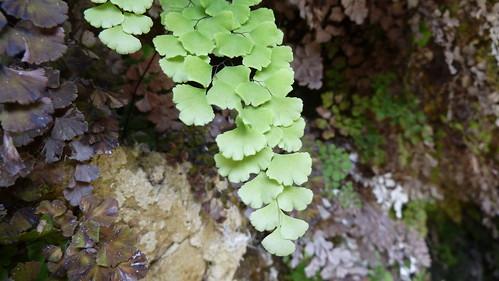 interessante Blätter (4477)