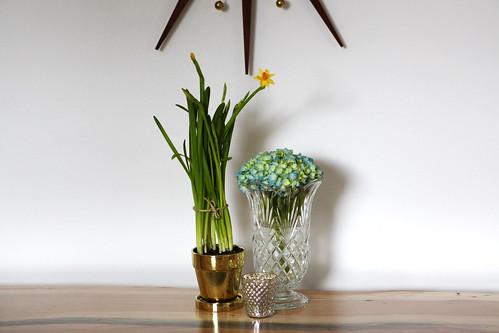 Daffodils & Hydrangea