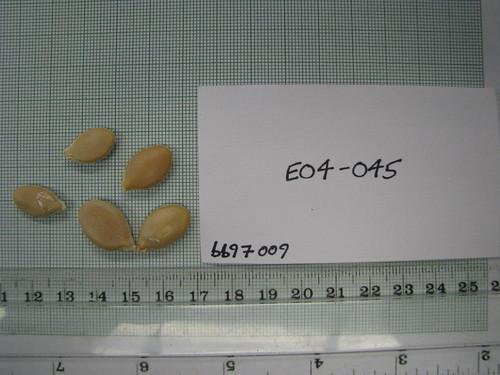 E04-045 bb97009 S1