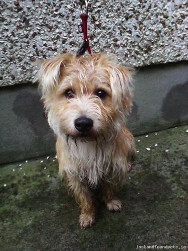 Mon, Feb 23rd, 2015 Found Male Dog - R156, Meath