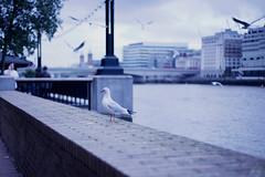 Thames theme