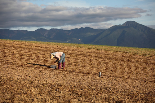 十勝岳と農作業風景