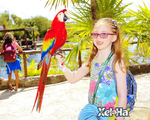 Xel-Ha Macaw