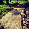 Joesinho :dog::paw_prints::paw_prints::paw_prints: #viralata #cachorro #dog #serranegra #saopaulo