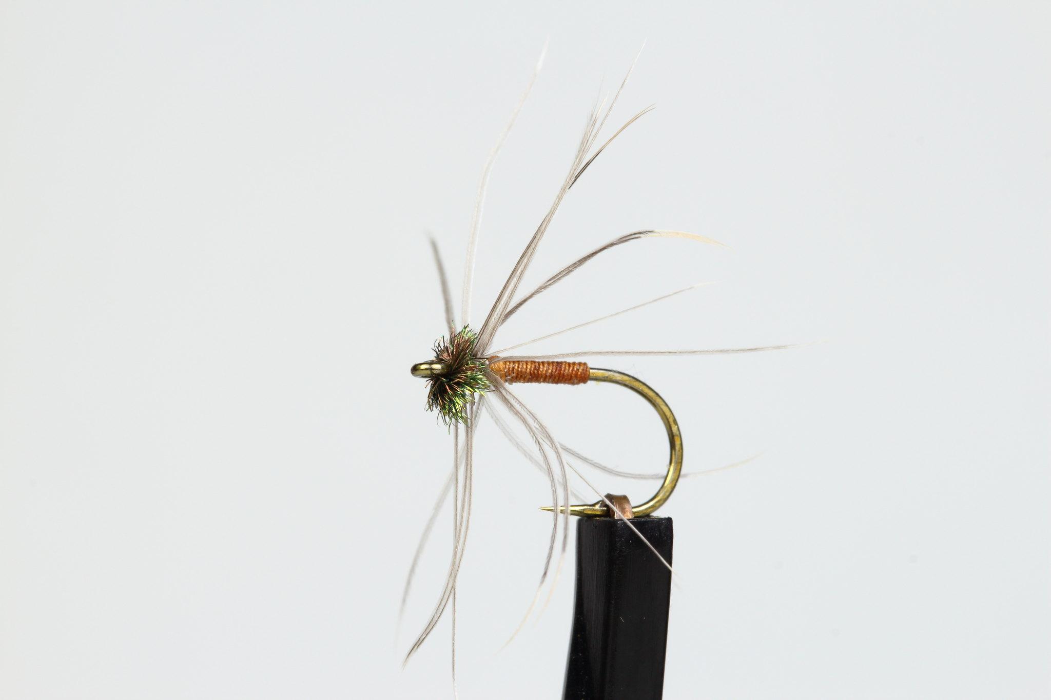 Winter Brown spider