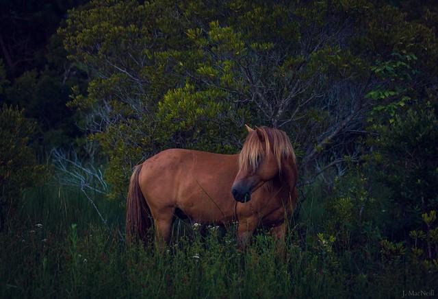 twilight stallion