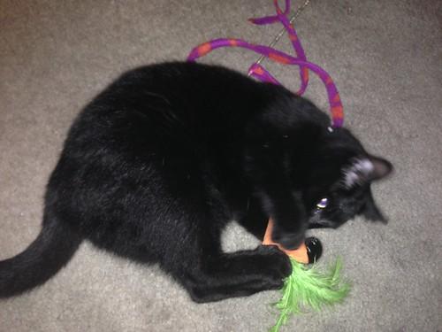 Carrot Killer
