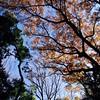 Great weather today:herb::fallen_leaf:#明治神宮