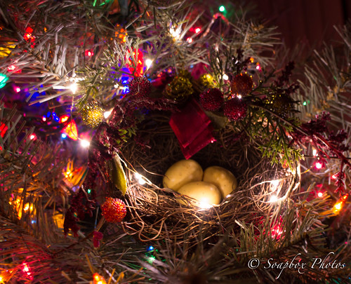 Bird's Nest in Christmas Tree