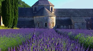 FRANCE - Provence, Abtei de Sénanque, 12313/4441