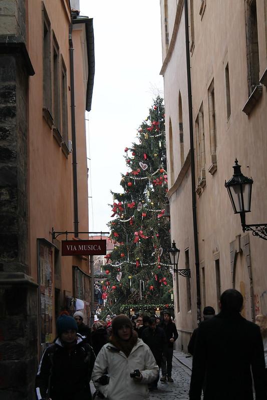 Glimpse of Christmas