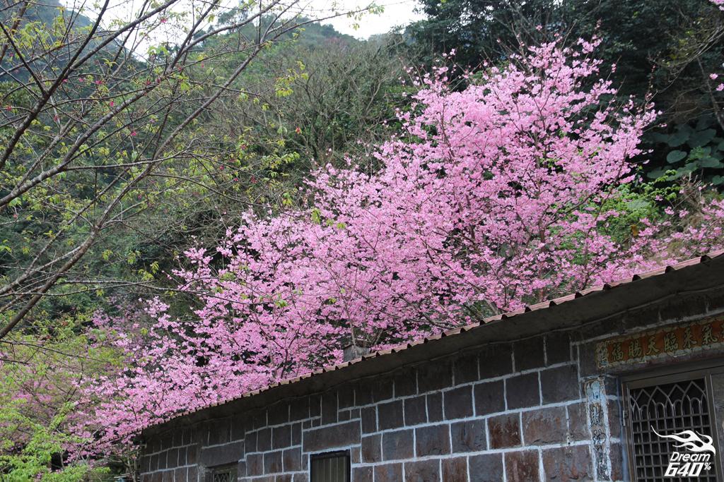 2015楓樹湖走進桃花源22