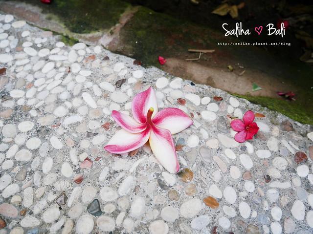 巴里島balivilla (15)