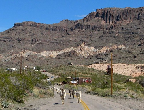 arizona wildlife ghosttown burros oatman historicroute66 arizonapassages