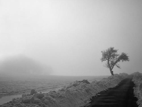 """""""Tree in  Winter"""""""