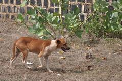 Stray Dog in Antisiranana