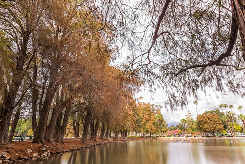 longexposure trees nature water landscape outside downtown fuji riverside outdoor branches roots wideangle southerncalifornia ultrawide fujinon fairmountpark apsc xt1 mirrorless remotetrigger lakeevans 10stopndfilter benrotripod fujinonxf1024f4ois