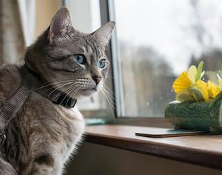 Lester watching cat next door