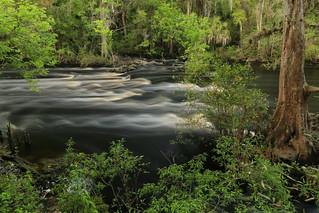 Hillsborough River, Rapids, Hillsborough River State Park Hillsborough County, Florida 1