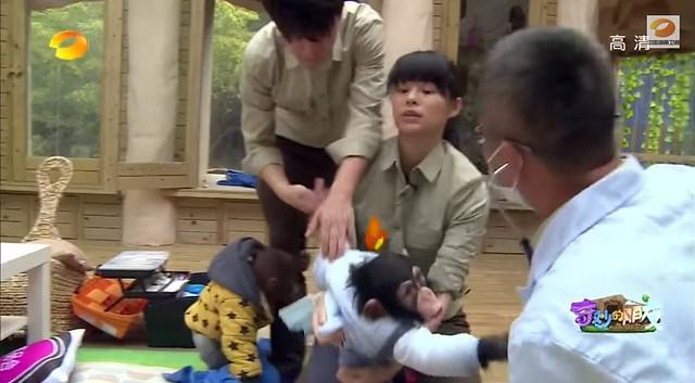 Chimp and orangutang bad handling (screen grab)