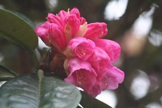Spring flowers 013