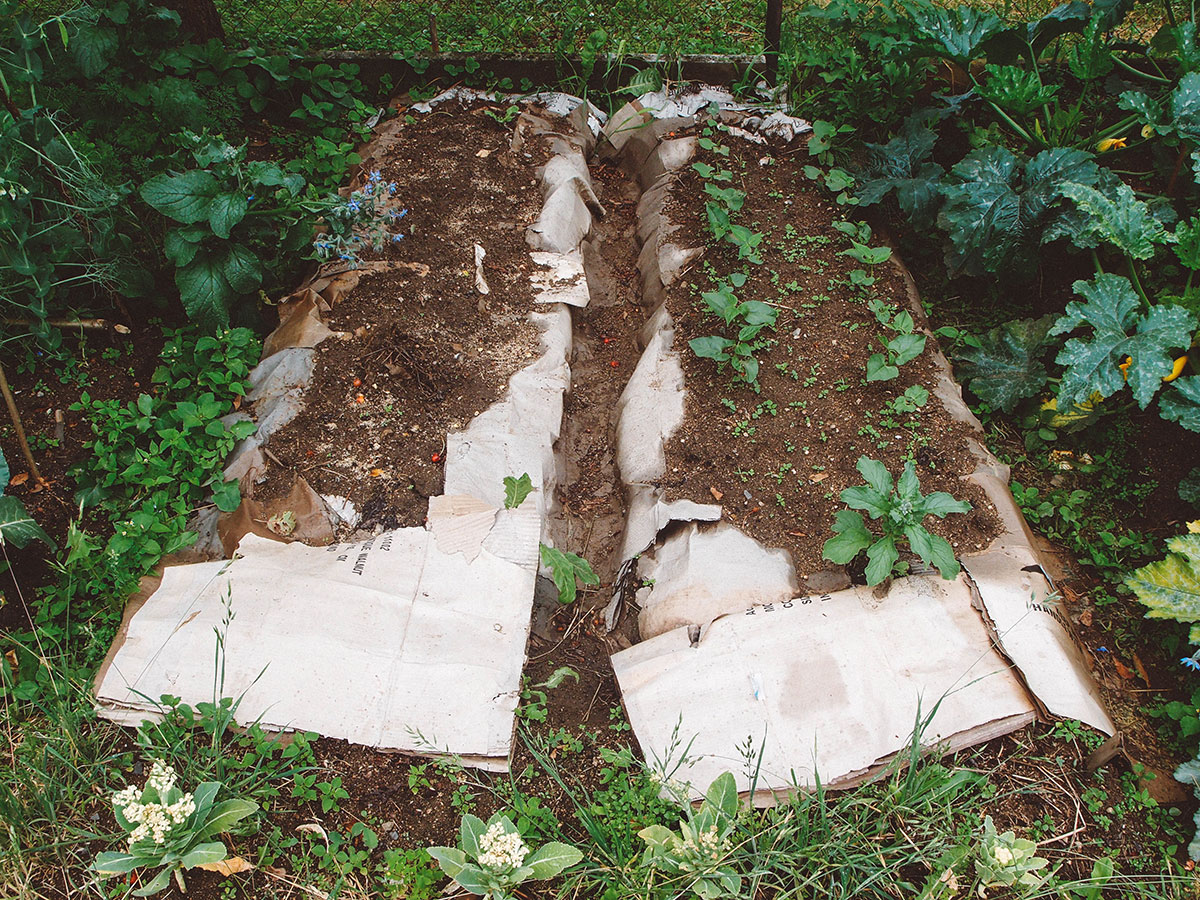 No Till Garden Beds – Bare Minimum Lasagna Sheet Mulching – Moon ...