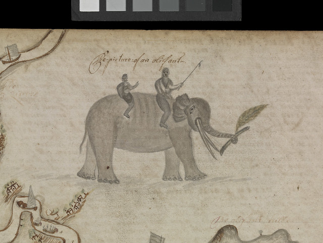 Barlow journal, leaf116, detail of elephant. JOD/4