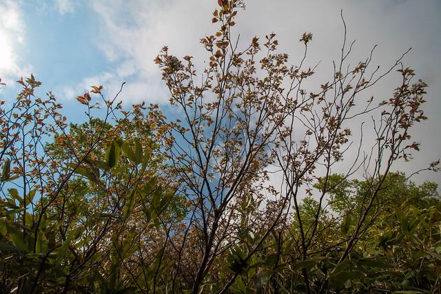 20150614-北海道羊蹄山(2日目)-0256.jpg