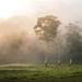 Morning Haze by mt.moco