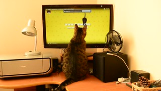 [Video] My cat is crazy about mice, spiders & birds