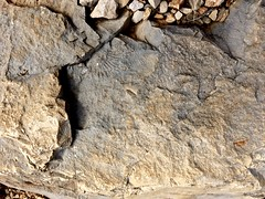 Fossil under our feet - Photo of Saint-Zacharie