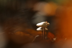 warm colors of autumn