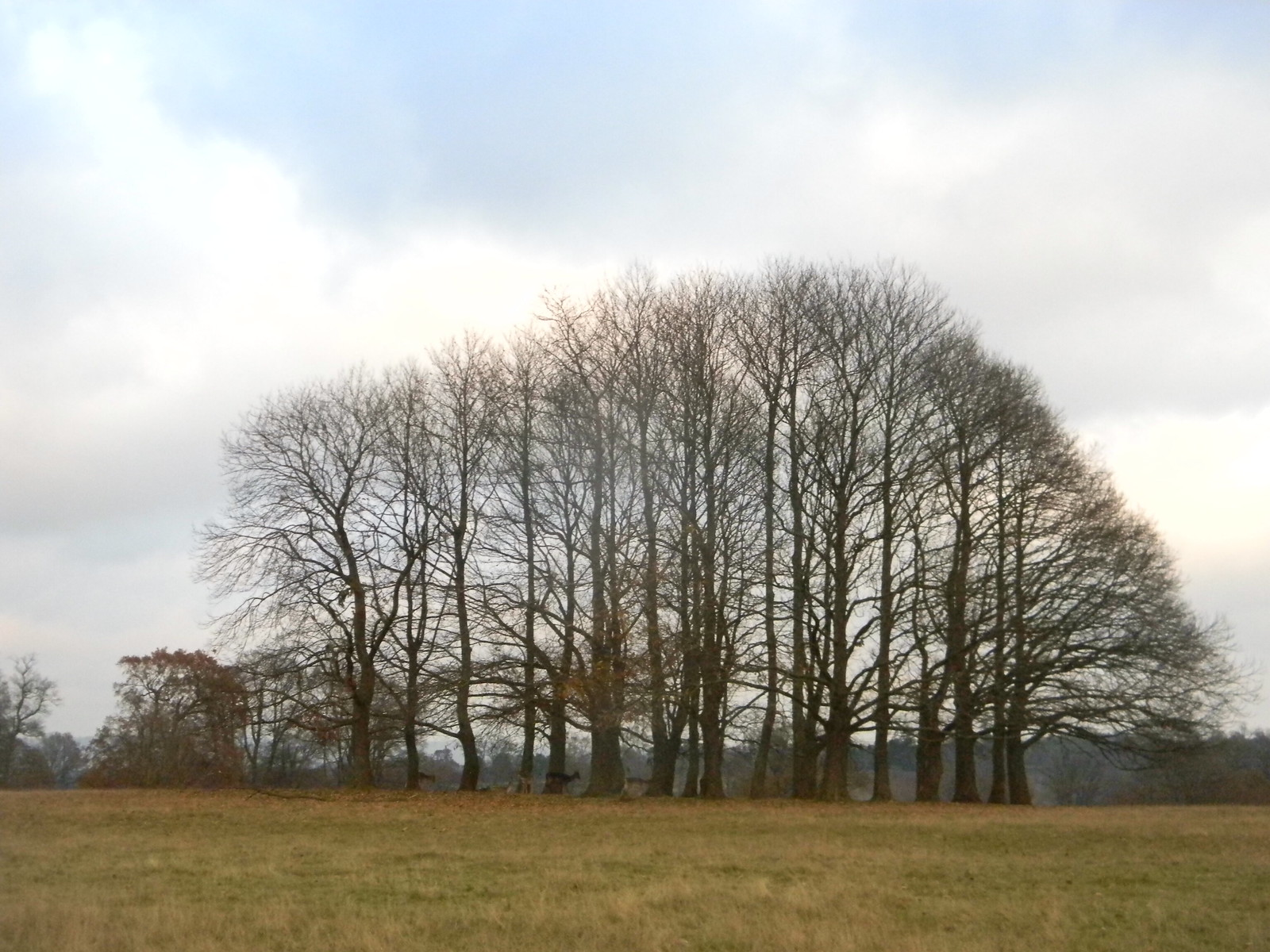 Herd and Copse Leigh to Sevenoaks Knole Park