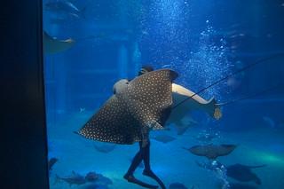 105 Osaka aquarium - voeren pijlstaartroggen