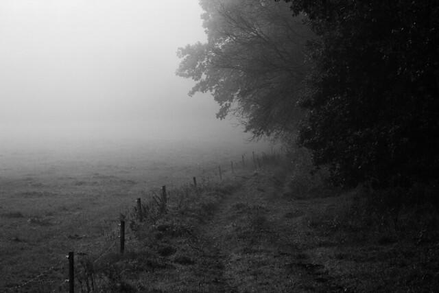 A Foggy Field - Jutland