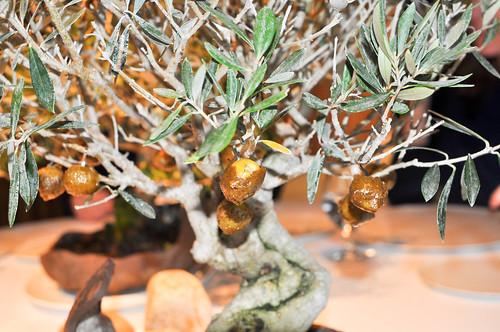 las famosas olivas...