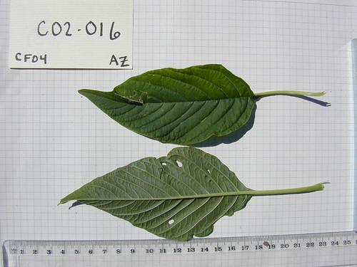 C02-016 CF04 L