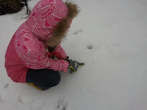 겨울동물발자국   시골집풍경