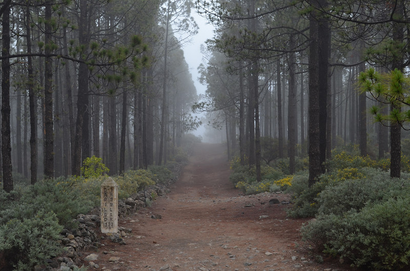 Walking in the forest, Gran Canaria