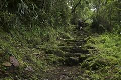 Ascending the back of Huayna Picchu