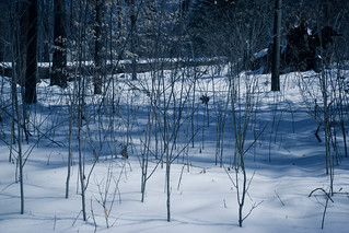 Snow day blue