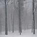 Snowfall by Stephen Downes