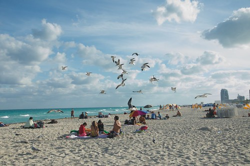 usa white beach sunshine clouds dance state florida miami seagull south united states