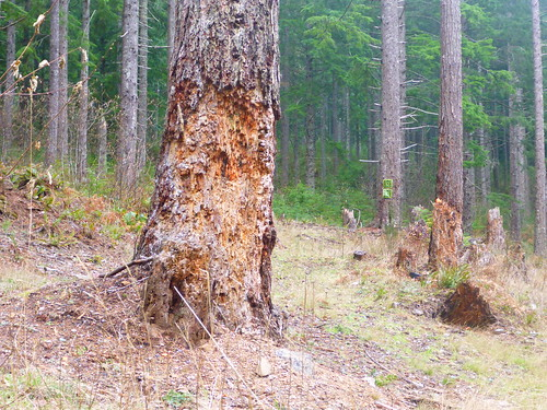 bark mthoodnationalforest barkformthood barkportland